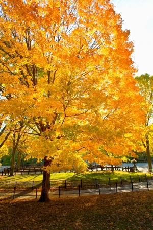 Autumn park 免版税图像
