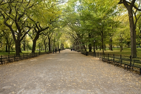 city park skyline:  Center Park NY . Beautiful park in beautiful city. Stock Photo