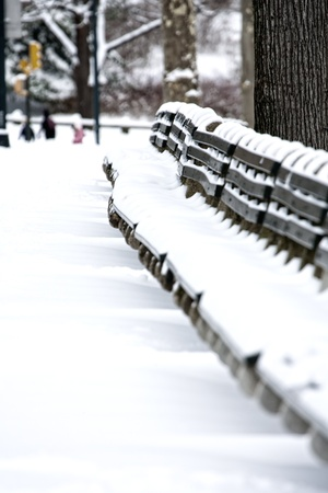 Line of Benches covered with snow. photo