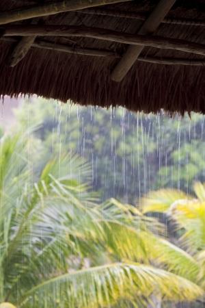 Tropical rain Reklamní fotografie