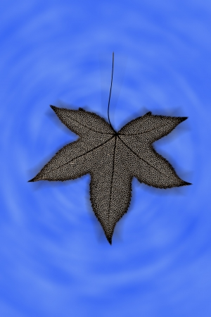 Red leaf structure photo