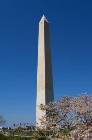 Washington monument on sunny day with blossom trees photo