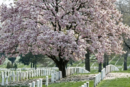 Rows of tombstones at Arlington National Cemetary Stock Photo