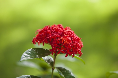 Red tropical flower photo