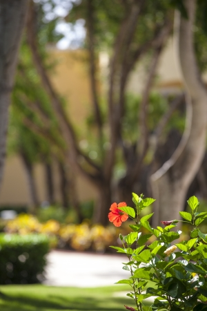 Exotic Landscaping Design  photo