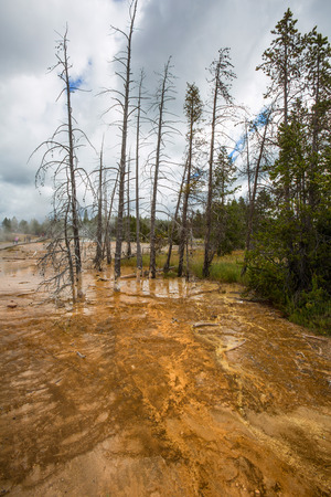 forceful: Fountain Paint Pot in Yellowstone National Park