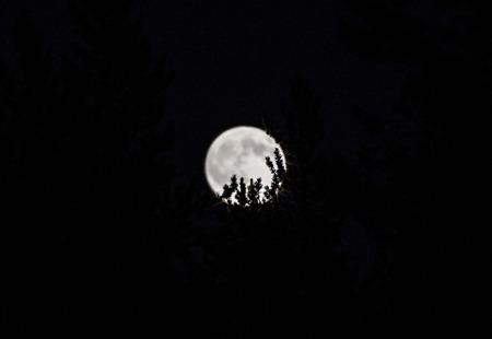 Full Moon over forest