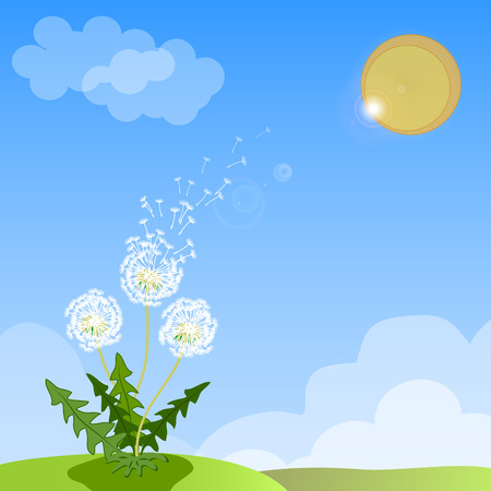 overblown: Vector of spring background with white dandelion.