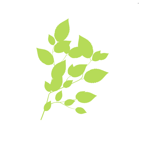 Green Branch, Isolated On White Background Vector Illustration
