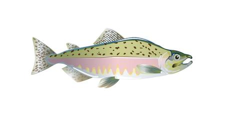 Poisson saumon rose. Illustration vectorielle optimisée pour être utilisée dans de petites tailles dans la conception d'emballages, la décoration, les graphiques éducatifs, etc.