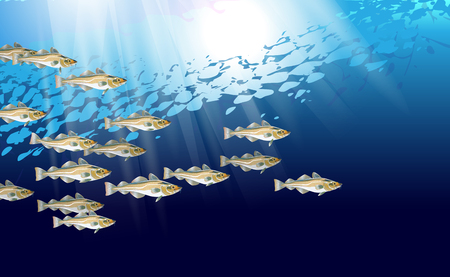 Codfish background. Cod atlantic, vector illustration with details and optimized specks to be used in packaging design, decoration, educational graphics, etc. Stock Illustratie