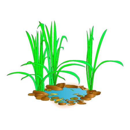 Beautiful little lake with grass. For landscape design and printing. Green landscape at the lake. Nature background. Vector illustration. Illustration