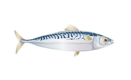 Scomber, Mackerel fish isolated on light background. Fresh fish in a simple flat style. Vector for design seafood packaging and market illustration. EPS10. Marine life or water nature.