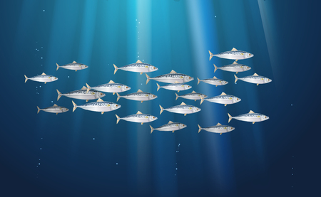 Background, school of scomber, mackerel fishes marine life. Banner fresh fish in a simple water nature. Seafood packaging and market. Vector illustration from to be used in backdrop design. EPS10. Vektorové ilustrace