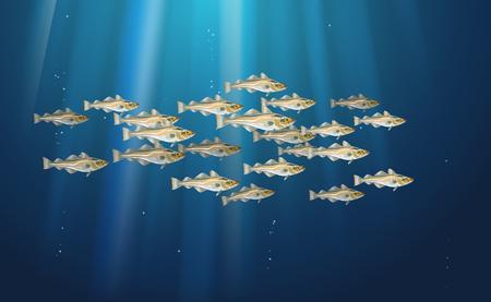 Banc de poissons Morue. La vie marine. Cod atlantique, illustration vectorielle avec détails et taches optimisées à utiliser dans la conception d'emballages, la décoration, les graphiques éducatifs, etc. Eps10.