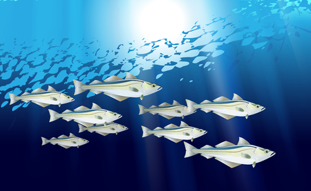Pollock Blue background school of fish. Flock fishes of Atlantic or Alaska. Marine life optimized from to be used in banner design, illustration vector Eps 10.