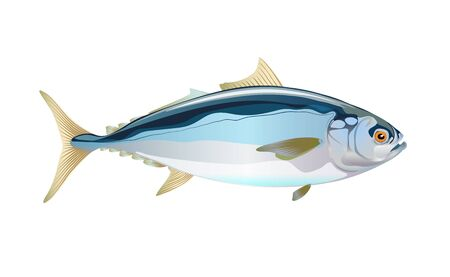 Japanese yellowtail fish, isolated flat on light background. Pacific fresh seafood in a simple style. Vector for design marine life and illustration market packaging. . Ocean, inhabitants water.