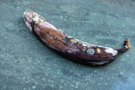 Rotten banana, moldy fruit on marble background.