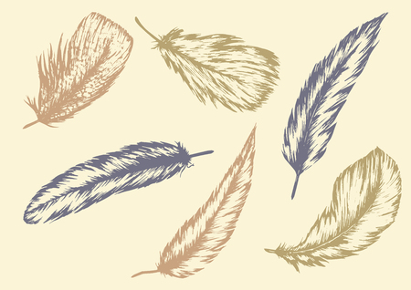 Hand drawn of Feathers illustration.