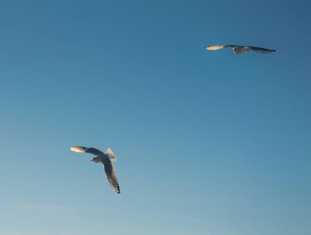 Two flying seagulls on a background of blue sky.