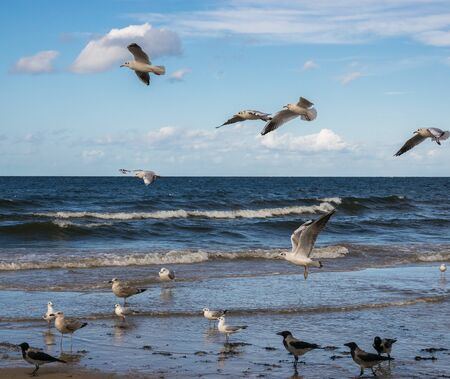 Seagulls flying over the blue sea and standing in shallow water.