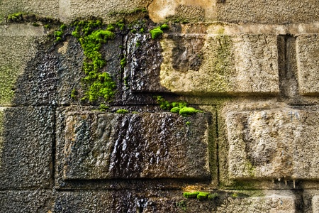 Old mossy wall with water leaking photo