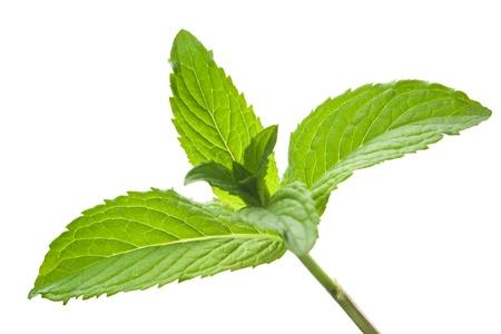 isoalated: Green mint leaves isoalated on white background