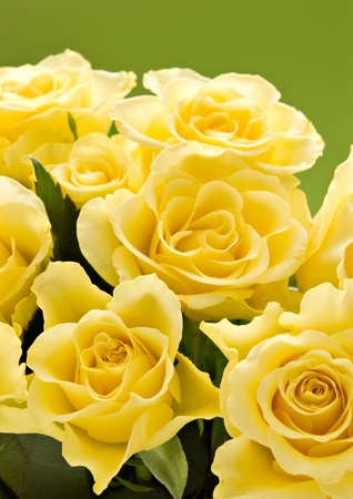 few yellow roses on green background photo