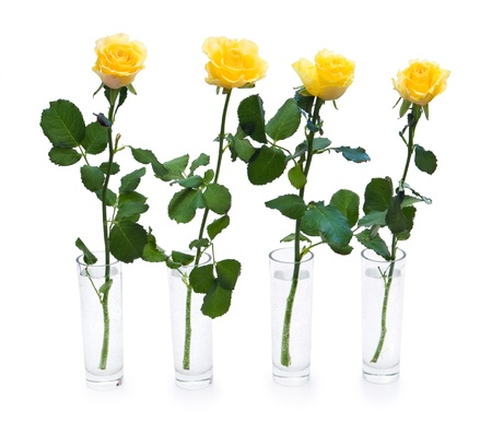 yellow roses in vases isolated on white background photo