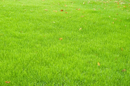 green grass with autumn leaves photo