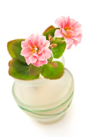 samll: two pink flowers in samll vase on white
