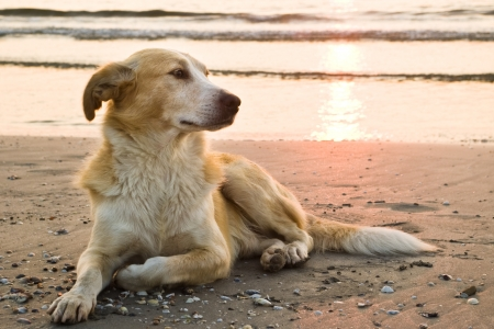 dog on the beach a full-length portrait