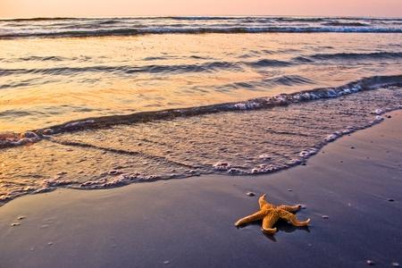 starfish on beach in beautiful morning light