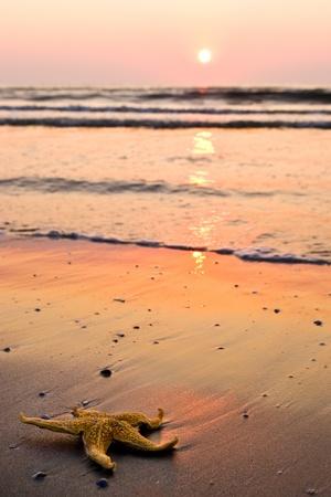 starfish beach: morning beach sunrise with starfish Stock Photo