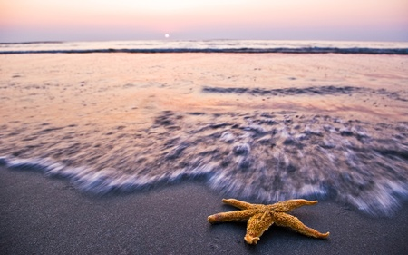 starfish on beach in sunrise light photo