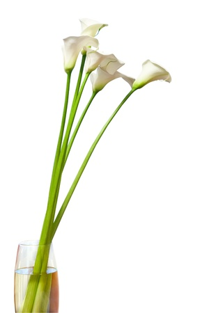 calla lily flowers in vase isolated