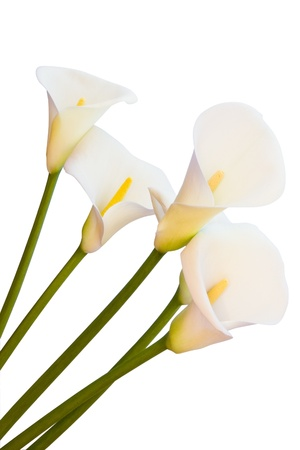 calla lillies isolated with clipping path Banque d'images