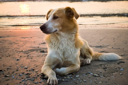 dog on the beach in morning light photo