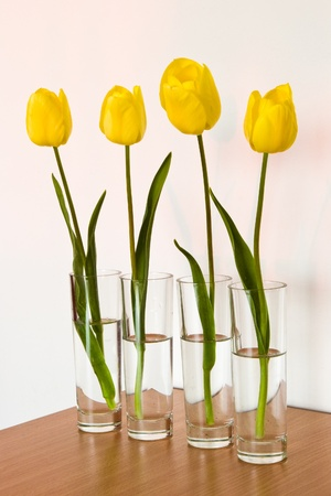 tulips in vase: four yellow tulips in small vases Stock Photo