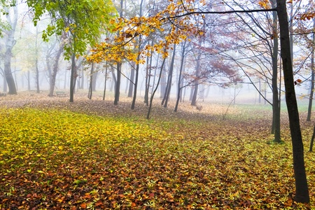 autumn colors in foggy morning photo