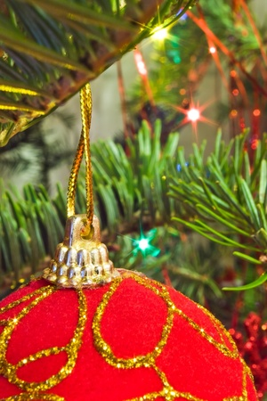closeup of christmas red ball on tree branch Stock Photo - 13516758