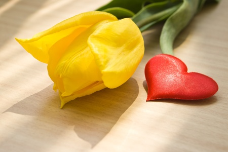 yellow tulip flower and red heart Stock Photo - 13604302