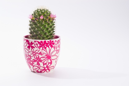 lovely coctu in pot on white with copy space