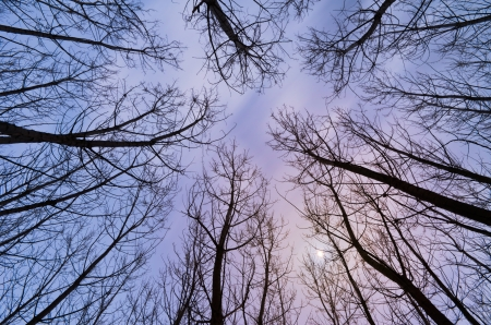 looking up at the sky in forest with trees and no leaves photo