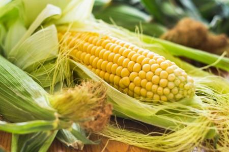Mais mit manchen Ohren teilweise geschälten