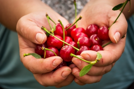 closeup of female hands holding offering cherries photo