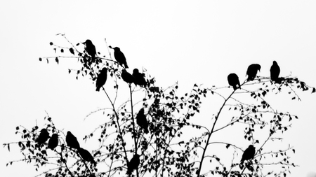 Birds sitting on branches black and white high contrast