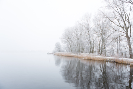 Frozen trees on the foggy shore of the Nieuwe Meer lake in Amsterdam, the Netherlands. Stockfoto