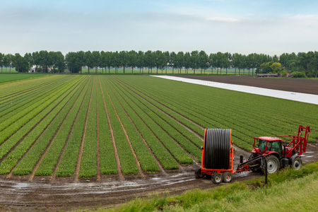 Red tractor with irrigation system to spray a flower bulb field in Abbenes the Netherlands. Stockfoto