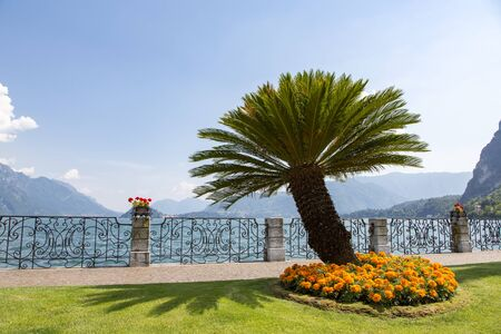 Promenade with orange flowers in park and palm trees on the shore, Lake Como, Menaggio, Lombardy region, Northern Italy, Europe